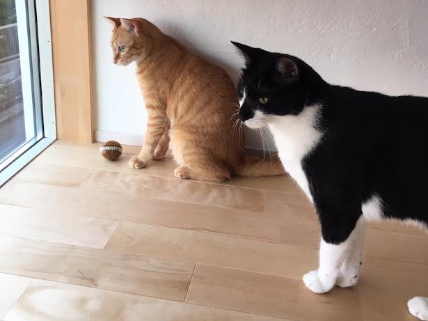 猫が外を眺めるための窓